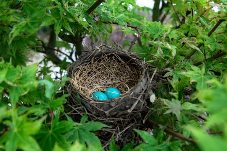 Nest Commits to BlackRock's ESG Cash Fund, Boosts Sustainable Focus